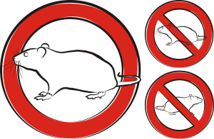 pest control or pest invasion - vector outlines of rat