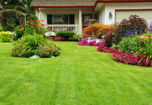 A carefuly kept front yard showing summer colours,